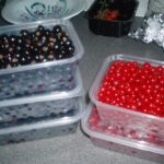 Free Berries From A Good Friend