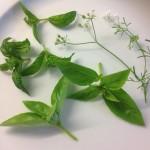 Herb sprigs
