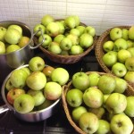 Apples, apples and …………. apples!