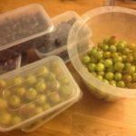 Some freebie fruit, lucky me