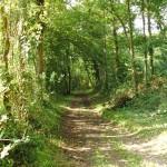 Woods, Meadows, Lakes & the garden
