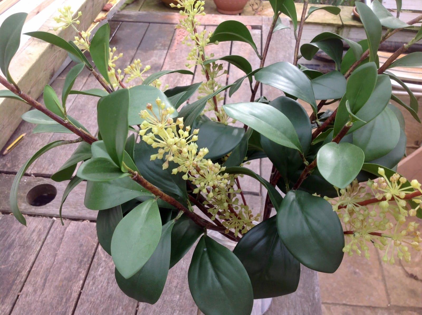 Foliage arrangement
