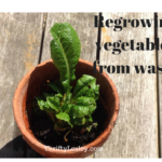 Regrowing vegetables from waste